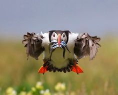 BirdGuides Photo of the Year 2009 | Environment | The Guardian