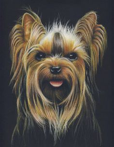 Custom Pet Portrait with color pencils 9 x 12  1 por MatanteGe, $120.00