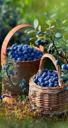 Blueberry Farm, Artsy Background, Kinds Of Fruits, Fruit Photography, Beautiful Day, Beautiful Pictures, Fruit Trees, Fruits And Vegetables, Belle Photo