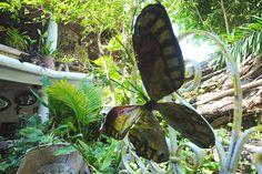 Butterfly Art #artaparthostel Ap Art, Butterfly Art, Hostel, Plant Leaves, Plants, Flora, Plant