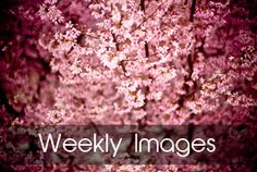 This  is a collection of un-copyrighted images that are free to use. With new uploads weekly, there are always new images to sort through in a variety of categories. Many of the images on this site are curated from other sites on this list.