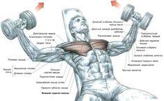 Image result for грудная клетка мышцы