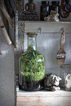 Discover all the benefits of making your compost. Learn how easy it is to make compost and increase the health of your soil. Large Terrarium, Bottle Terrarium, Moss Terrarium, Terrarium Plants, Ideas Florero, Self Sustaining Terrarium, Cherry Tomato Plant, Garden Spaces, Small Gardens