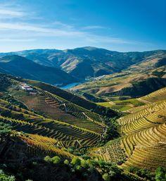 Viaje por el Valle del Douro · National Geographic en español. · Rutas y escapadas   Viñedos del Duero  La Unesco declaró Patrimonio de la Humanidad el paisaje de viñas y montes bajos que surca el Duero antes de alcanzar su desembocadura cerca de Oporto.