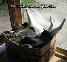 Everyone should have a box of spare cats ....just in case !