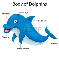 adorable body part: Illustrator body of dolphins - Body Parts Teaching Vocabulary, Teaching Phonics, Vocabulary Cards, Preschool Phonics, Preschool Colors, Preschool Ideas, Teaching Ideas, Animals Name In English, Life Skills Kids