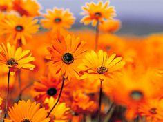 Hermosas flores q un dia me regalaste, como olvidarlo !!