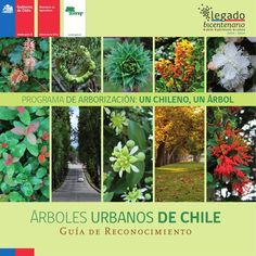 """La Guía de Reconocimiento """"ÁRBOLES URBANOS DE CHILE,"""" describe 56 especies arbóreas utilizadas en nuestras ciudades, tales como el Chañar y la Tara por el Norte, y los Notros y Araucarias por el Sur. Esta tiene por objetivo aportar conocimientos técnicos y teóricos para el reconocimiento, establecimiento, cuidado y manejo de los principales árboles urbanos. Además, figuran más de 400 fotografías que muestran algunos de los atributos de estas especies para ayudar a su identificación por…"""