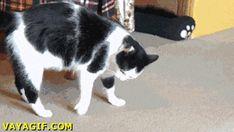 Gato rodando