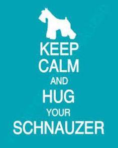 Merle Schnauzers Mini T-Cup Parti Schnauzer Puppies For Sale TX