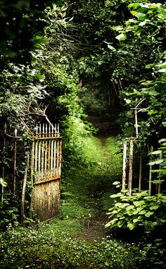 I think I can figure out what makes this one secret... The hush that comes over one who is contemplating going through the gate and venturing into the seductive darkness just beyond the shock of light green...That is a secret place for sure... where any number of magical, secretive, breathtaking things may occur! and. . .  when you return you must keep the secrets!!!