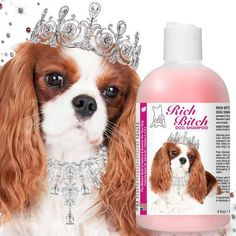 The Blissful Dog Rich Bitch &Drama Queen Cavalier King Charles Spaniel Shampoo Imbues your Cavalier's coat, with moisture, glossy sheen & impeccably good taste. Spaniel Puppies For Sale, Spaniel Dog, Spaniels, Cavalier King Charles Dog, King Charles Spaniel, Cheap Pet Insurance, Puppy Care, Dog Care, Dog Items