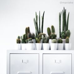 Cactus | @manieke