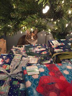 Phoebe has a seasonal job.
