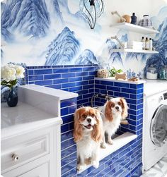 15 photos that are probably on your pets pinterest board ludicrously lux laundry room with a great dog washing station house beautiful september 2017 solutioingenieria Images