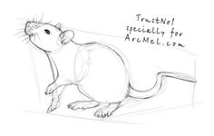 How to draw a rat step 3                                                       …