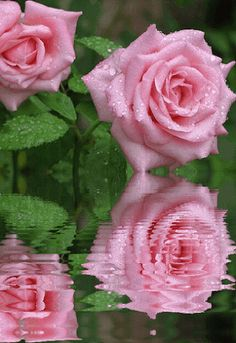 Imagen para regalar por el Día de la Madre de lindas rosas con movimiento rosas rosadas