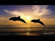 (17) Relaxing Sleep Music, Dreaming with Dolphins, Underwater Sounds for Deep Relaxation, Stress Relief - YouTube