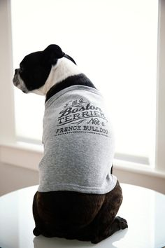 T-shirt for Boston Terriers