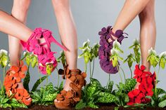 Orchids shoes
