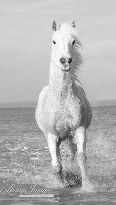 White Horse  Fine Art Horse Photograph by Carol Walker www.LivingImagesCJW.com
