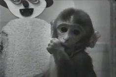 """Little Lab of Horrors: Psychologist Harry Harlow's famous experiment in which baby rhesus monkeys chose fake mothers made of cloth over wire models rigged with milk bottles changed the way humans raised children. (Before then, parental distance was encouraged to promote independence.) But Harlow also wanted to explore the darker side of love—that is, the absence of it. To study depression, Harlow placed monkeys in a chamber he called """"the pit of despair."""" He found that in isolation the ..."""