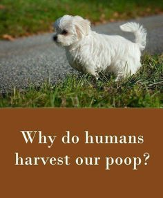 Why do humans harvest our poop?