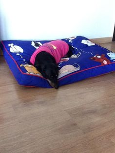 Don't give up on your dreams  KEEP SLEEPING <3  Buy this super amazing bed and t-shirt for your angel here : http://www.headsupfortails.com/ #dogs #dogbeds #pinkitup #dogclothes #dogtshirts #prettydogproducts #shoponline #headsupfortails #huft