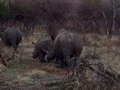 Mabalingwe. Bela Bela. Most Beautiful, Beautiful Places, Unicorns, South Africa, Elephant, Nature, Animals, Belle, Naturaleza