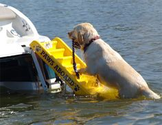 Paws Aboard Doggie Boat Ladder