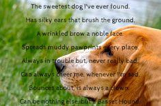 Sweetest dog I've ever found #bassethound