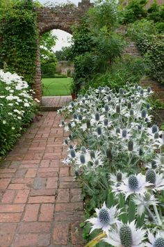 Eryngium / sea holly edges a brick path. At Sissinghurst, one of the white garden's secrets is a preponderance of gray and silver, colors that make nearby whites look whiter. Moon Garden, Dream Garden, Big Garden, Water Garden, The Secret Garden, Brick Path, Brick Archway, Sea Holly, White Plants