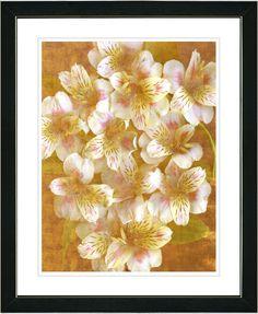Alstroemenia by Zhee Singer Framed Fine Art Giclee Painting Print
