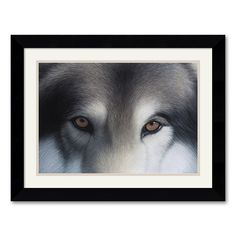 Eyes of the Hunter: Gray Wolf Framed Art Print by Charles Alexander, Multicolor