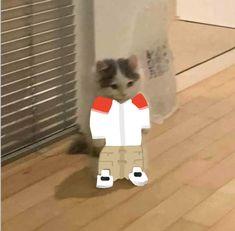 Minecraft Wallpaper, Minecraft Fan Art, Minecraft Stuff, Gato Anime, Anime Cat, Pop Cat, Youtubers, Team Wallpaper, Cat Icon