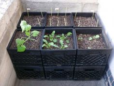 Milk crate gardening   Iam for sure doing this !!!!   Great way to save space....