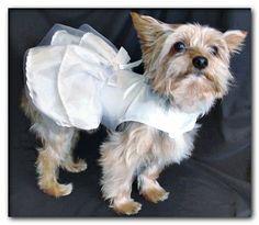 dog wedding day Dog Wedding Attire, Dog Wedding Dress, Dog Face Drawing, Dog Names Unique, Dog Tuxedo, Cute Dog Clothes, Maila, Dog Clothes Patterns, Dog Crafts