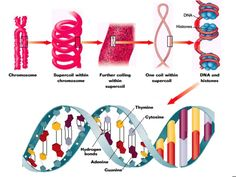 The structure of nucleic acids Biology Monk gives a simple and informative screencast on nucleic acids including DNA and RNA. Functional groups, functions and general appearance of the structures are covered in this great biochemistry video.