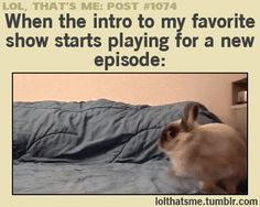 charming life pattern: gif - thatsme - when the intro to my favorite show...