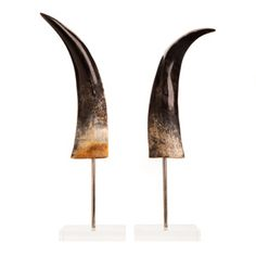 Polished cow horns with black detailing mounted vertically on a stand in lucite block. A unique table top accessory. Fish and Wildlife Services certified.