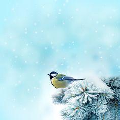 Vogel in Winterlandschaft