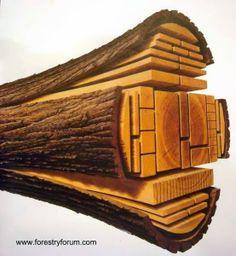 Ilustración que evidencia el origen de las piezas de madera usadas para construir