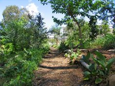 Forest Garden Design | Way Through the Woods: Designing the Paths in our Forest Garden