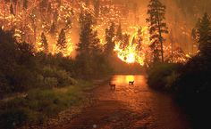 Two elk stand in a stream as a forest fire rages behind them, Bitterroot National Forest, Montana, on Aug. Photo by John McColgan, a fire behavior analyst working for the Alaska Forest. Into The West, Into The Fire, Wow Photo, Paraiso Natural, Wild Fire, Big Sky Country, All Nature, Science Nature, We Are The World