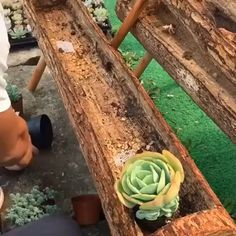 Garten Wish to know what are the most effective strategies for replanting succulents? Succulent Landscaping, Succulent Gardening, Garden Plants, Container Gardening, Indoor Plants, Succulent Rock Garden, Planting Plants, Succulent Care, Diy Garden