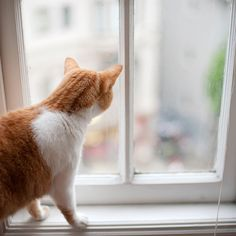 house with lots of windows for kitties to peer out of