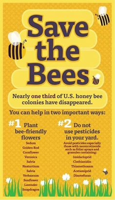 Honey Bee Facts, Raising Bees, Plakat Design, Bee Friendly, Save The Bees, Bee Happy, Bees Knees, Bee Keeping, Queen Bees