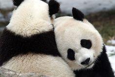pandas<3<3