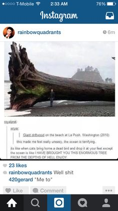 Are we ignoring the fact that it's at La Push? Where all there werewolves hang out???