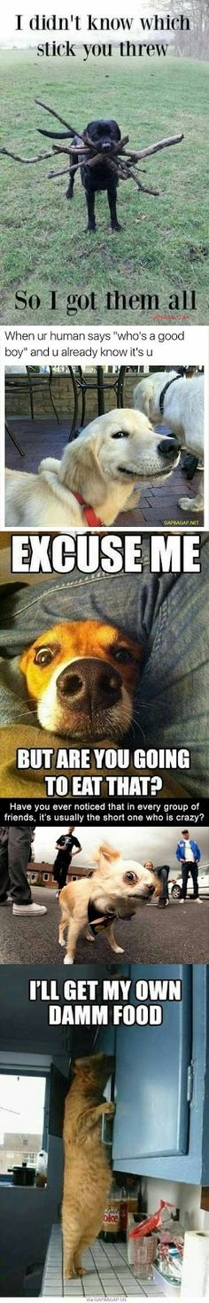 Top 10 Funniest Memes On The Internet ft. Funny Dogs